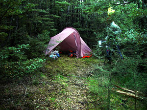 Tramping camp in beech forest