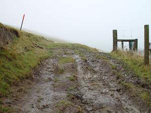 Kaituna track to Packhorse Hut