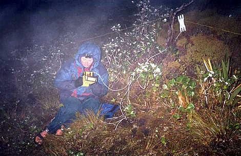 Radio sched on the Tin Range, Stewart Island