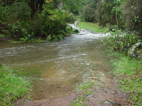 Flooded stream on Kaituna track
