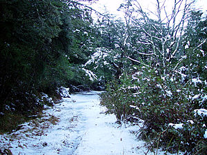 Woolshed Creek track