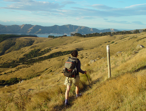 Honora heads back to Orton Bradley Park from Packhorse Hut