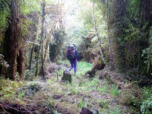 Honora test walking the recut Rocky Creek track
