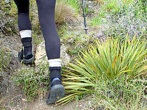 Dsc03505_sandal_tramping_speargrass_tp