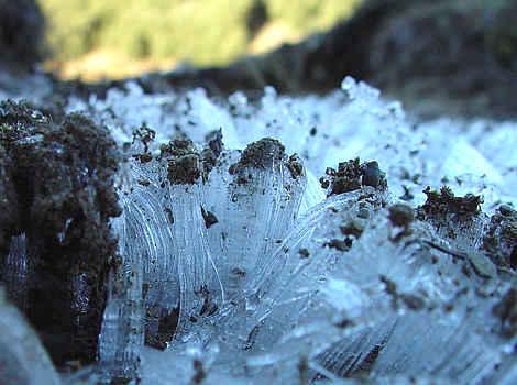 Frost on Halleluja Flat, Andrews Stream